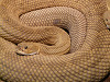 Image of term snake