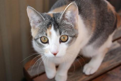 Image of term cat